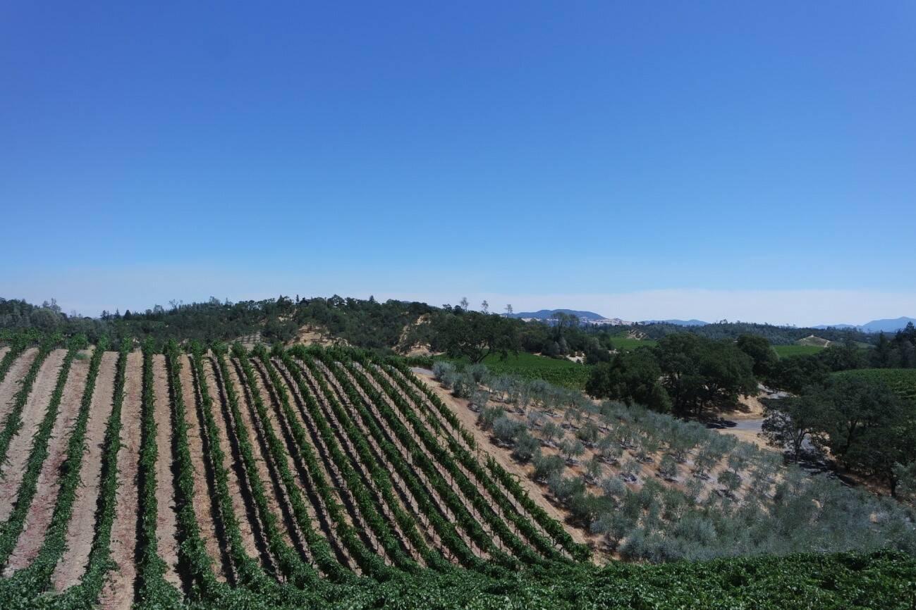 Comment s'adaptent les vignerons pour faire face au réchauffement climatique ?