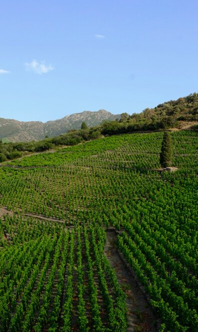 LES GRAPPES : BUYING WINE DIRECTLY FROM WINEGROWERS