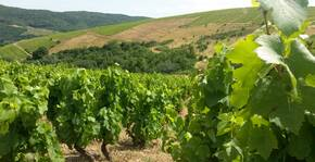 Les vignes du Domaine des Frontières