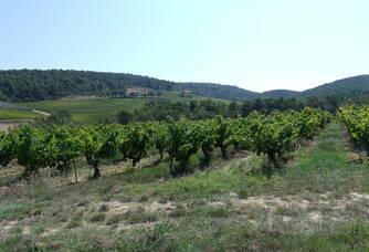 Les vignes du Domaine Eygyestre