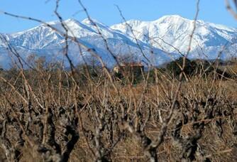 Vignes et montages au Domaine Vaquer