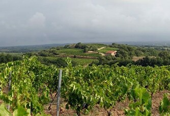 Les vignes du Domaine Vaquer