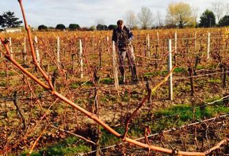 Vignoble Du Domaine Le Lau