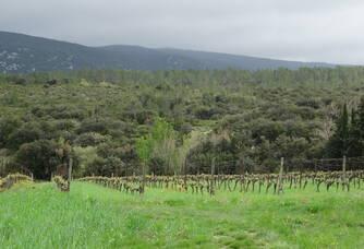 Vue sur les vignes au Vignoble Reveille