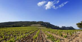 Le vignoble du Domaine d'Ouréa