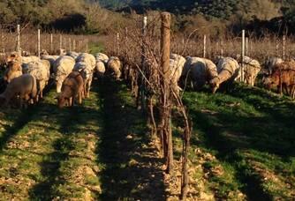 Communion de la faune et la flore dans nos vignes