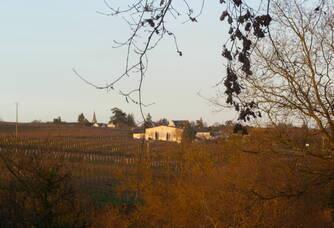 Vue sur le vignoble du Domaines des Noëls