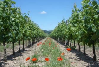 Parcelles fleuries au Domaine La Chevallerie