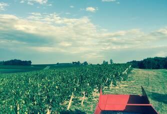 Récolte du Vignoble Queyrens