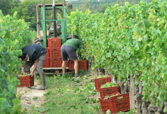 Vendanges au Vignoble Queyrens