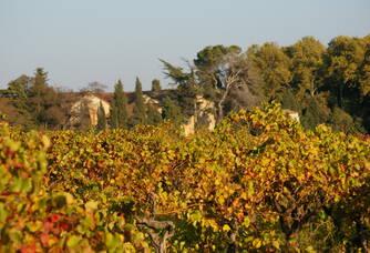 Au coeur des vignes du Château de Pech-Céleyran