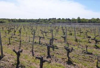 Vignoble du Château Mascard