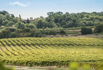 Les vignes du Château de Caux et Sauzens