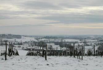 Les vignes du Château Faurie sous la neige