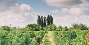 Domaine de Noiré(Loire) : Visite & Dégustation Vin