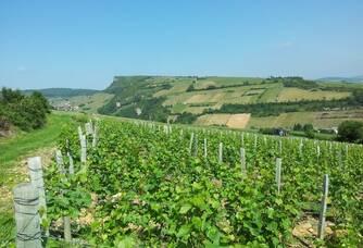Les vignes du Domaine du Roure