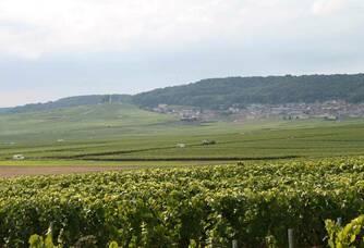 Le vignoble du Domaine Rousseaux-Batteux