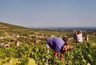 Travail dans la vigne au Château Des Correaux