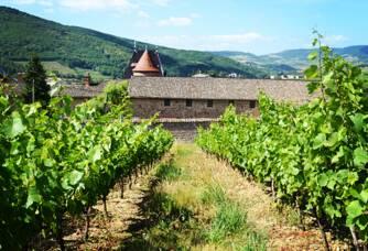 Les vignes du Château de Juliénas
