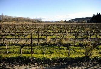 Les vignes du Domaine de la Bastide Jourdan