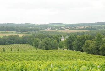 Les vignes du Château Vermont