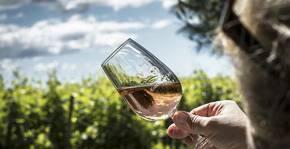Enclos de la Croix(Languedoc) : Visite & Dégustation Vin
