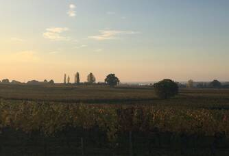 Vue sur les vignes du Château Haut Prieur