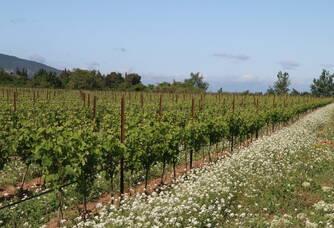 Le vignoble du domaine Sainte Marie de Crozes