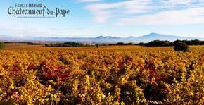 Vignobles Mayard - La vigne en automne