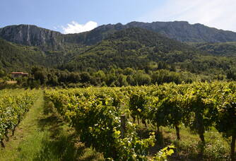 Vignoble de la plaine