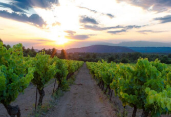 Le soleil couchant sur les vignes