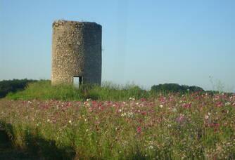 Le moulin et la jachère fleurie
