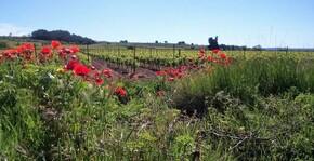 Domaine Sibille(Languedoc) : Visite & Dégustation Vin