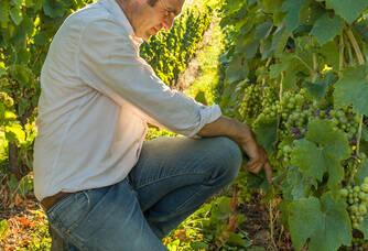 Stéphane Serol dans les vignes du Domaine Serol