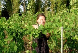 L'enroulement des vignes afin de ne pas couper l'Apex