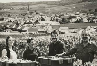 Récolte des chardonnays dans notre parcelle des Gillis située entre Chamery et Ecueil.