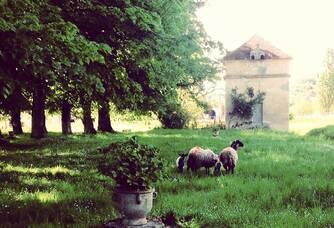 Tondeuses biologiques au Château du Rocher - Saint Emilion