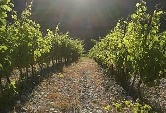levé du soleil dans le vallée de Pégairolles de l'Escalette