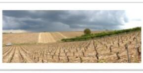 Domaine Maltoff(Bourgogne) : Visite & Dégustation Vin