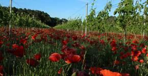 Domaine des Gravennes(Vallée du Rhône) : Visite & Dégustation Vin