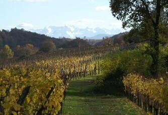 vigne du domaine Bordenave en Jurançon