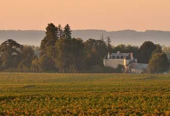 Château de Minière - Le vignoble