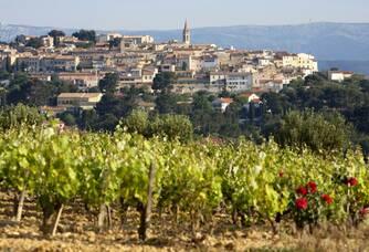 Domaines Bunan - Le vignoble