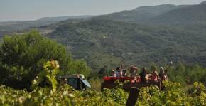 Domaine Les Promesses de la Terre(Languedoc) : Visite & Dégustation Vin