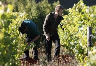L'humain au centre du vin