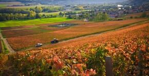 Champagne Gratiot-Delugny - Le vignoble en automne