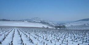 Domaine Vincent Grall(Loire) : Visite & Dégustation Vin