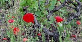 Chateau des Bachelards(Beaujolais) : Visite & Dégustation Vin