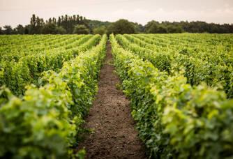 Domaine Mérieau - La vigne