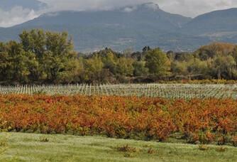Domaine Rouge-Bleu - Le vignoble